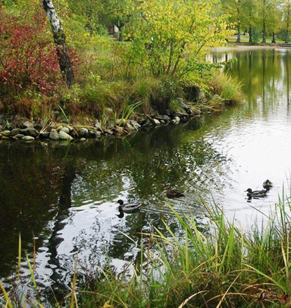 SealEco EPDM Garden Pond Sweden.jpg